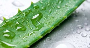 All the info about Aloe Vera