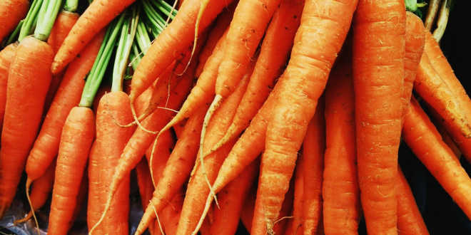 Carrots are sources of beta-carotene