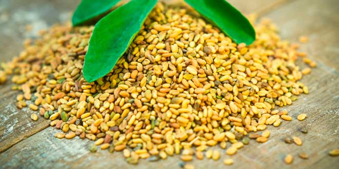 Fenugreek – What is it, Medicinal uses and Benefits