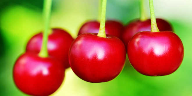 Cherry inositol content