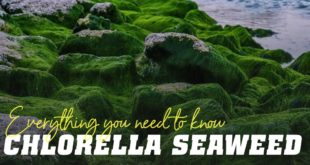 Chlorella seaweed