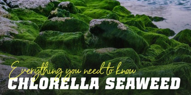 Chlorella – An effective detox seaweed for the body