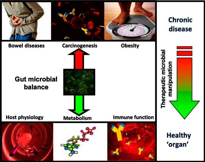Gut microbial balance