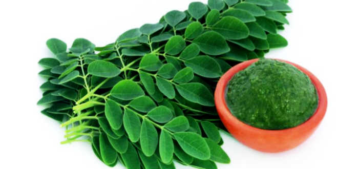 Moringa leaves and powder in a bowl