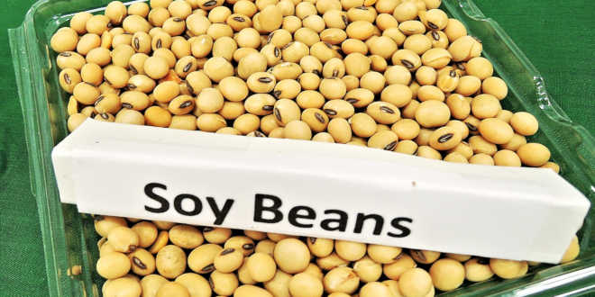 Box of soy beans