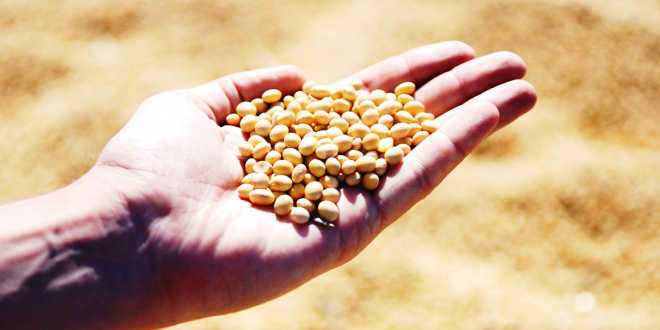 A handful of soy