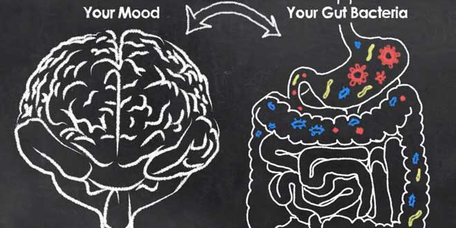 Connection between the brain and the gut bacteria