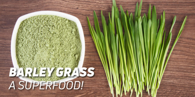 Barley grass: Benefits and Properties of this Superfood