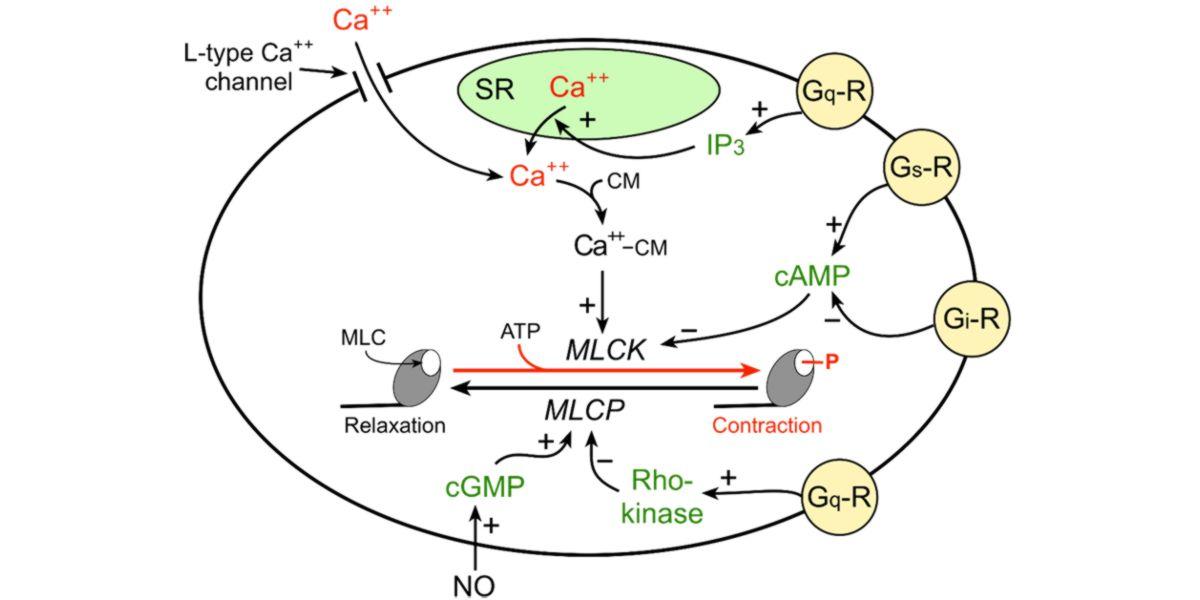 Molecular signalling