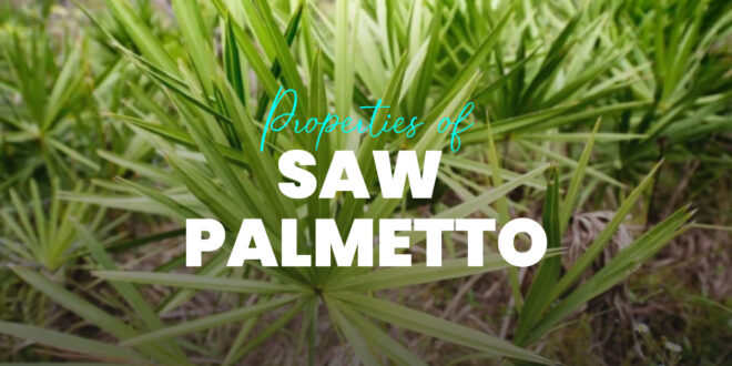 Saw Palmetto: What It Is, Properties, Benefits and How to Take It