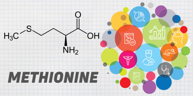 Methionine: All you need to Know about this Amino Acid
