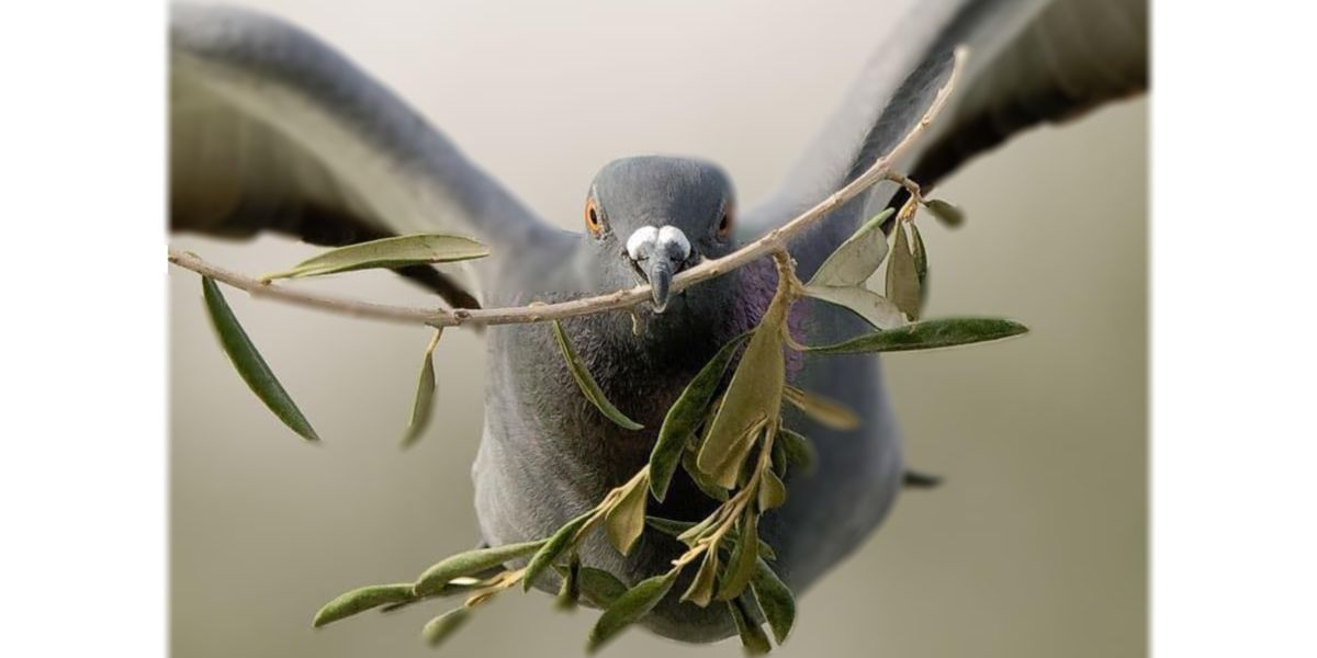 Pigeon holding an olive branch