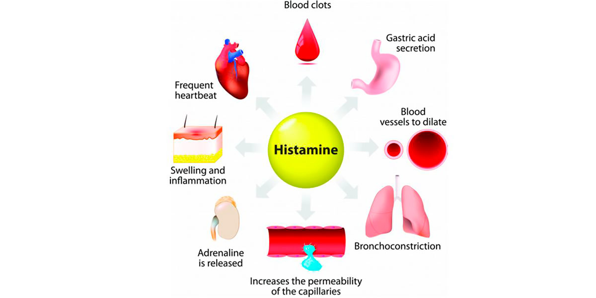 Effects of histamine on the body