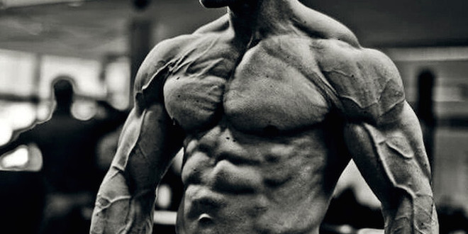 Muscle definition