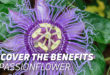 Passionflower: Find out the Natural Benefits of this Ancestral Plant