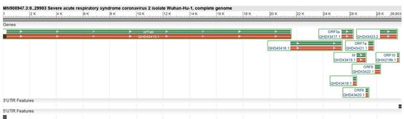Coronavirus genome sequence
