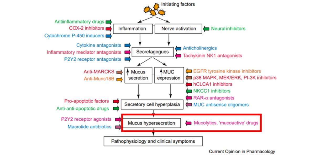 Pathophysiology and clinical symptoms