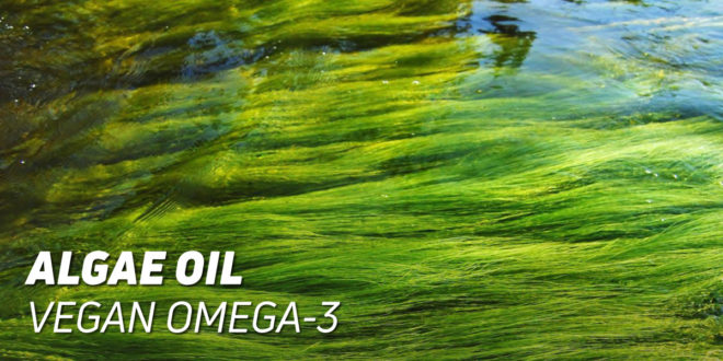 Algae Oil: Vegan Omega-3