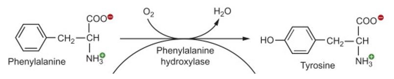Phenylalanine conversion process