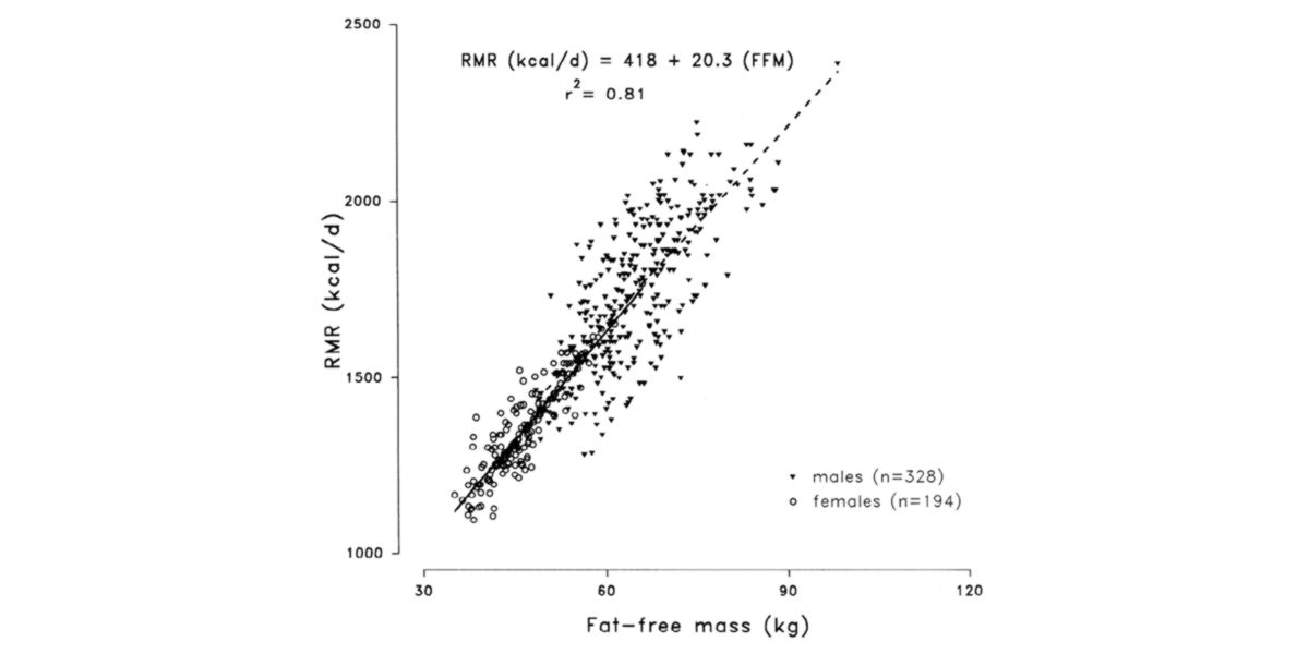 Fat-free mass and metabolic rate