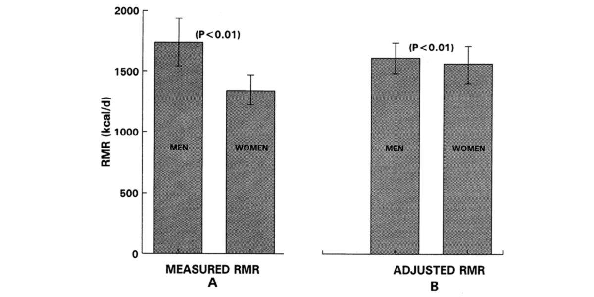 Metabolic rate between men and women