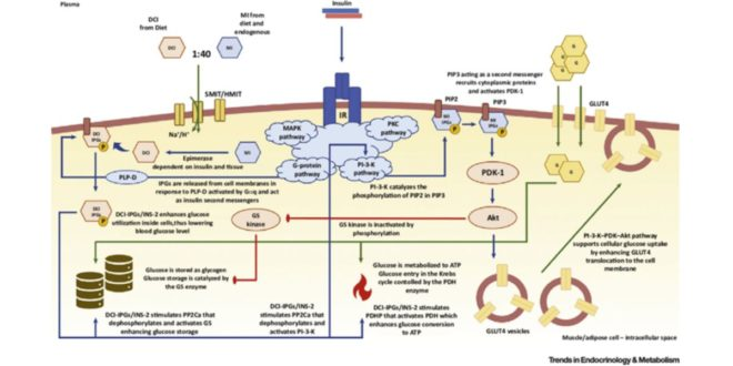 Myo-inositol and insulin