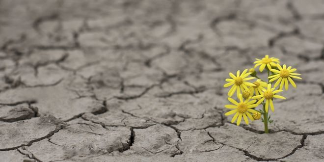 Resilience – Your Most Valuable Asset