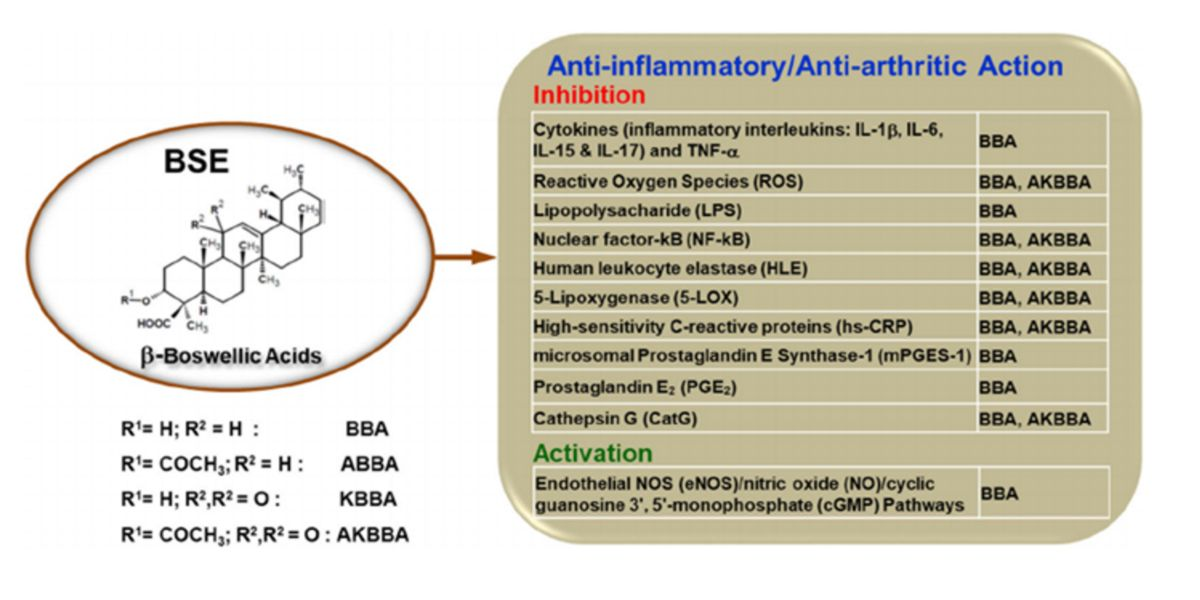 Anti inflamatory action
