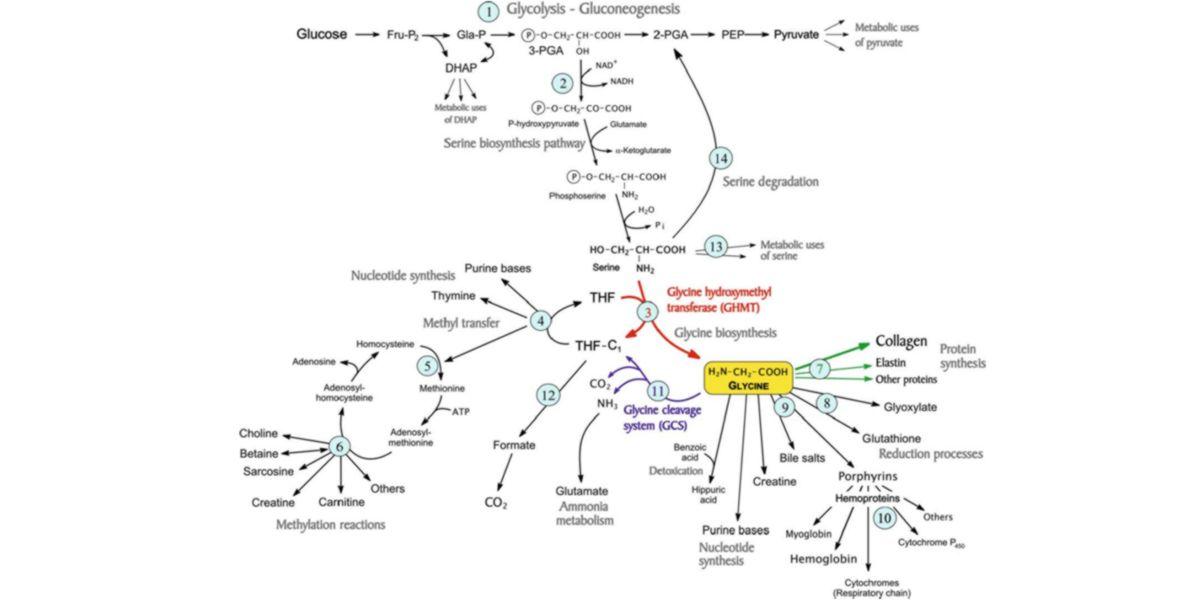 Glycine biometabolism
