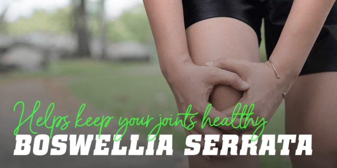 Boswellia Serrata: Natural Remedy for Joint Pain