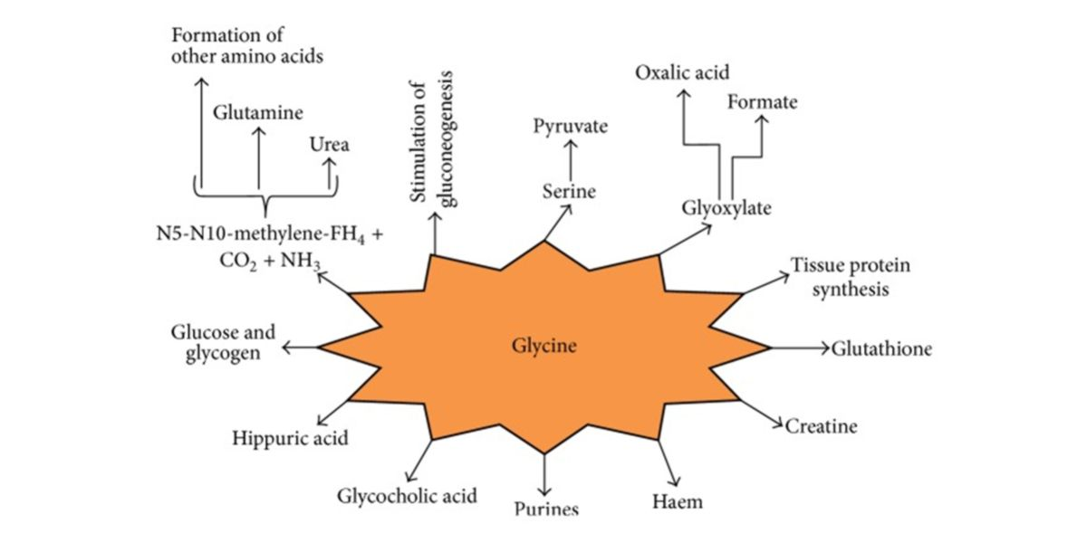Glycine functions