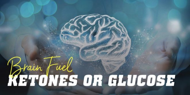 What is the Best Fuel for the Brain, Ketones or Glucose?
