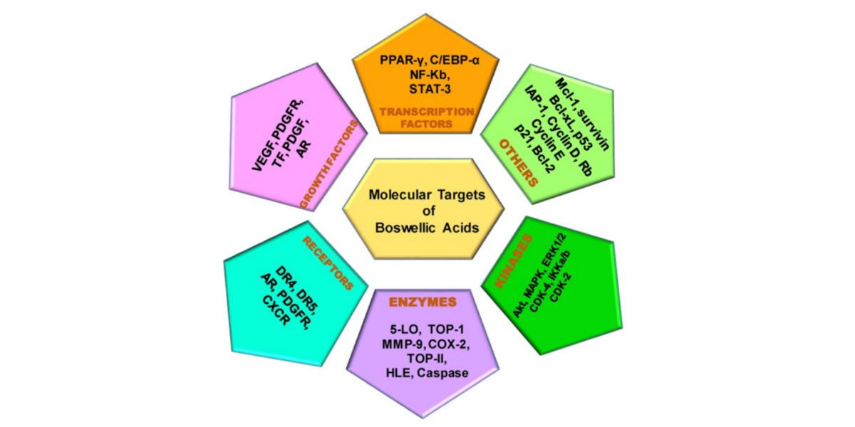 Molecular action targets