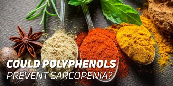 Could Polyphenols Prevent Sarcopenia?