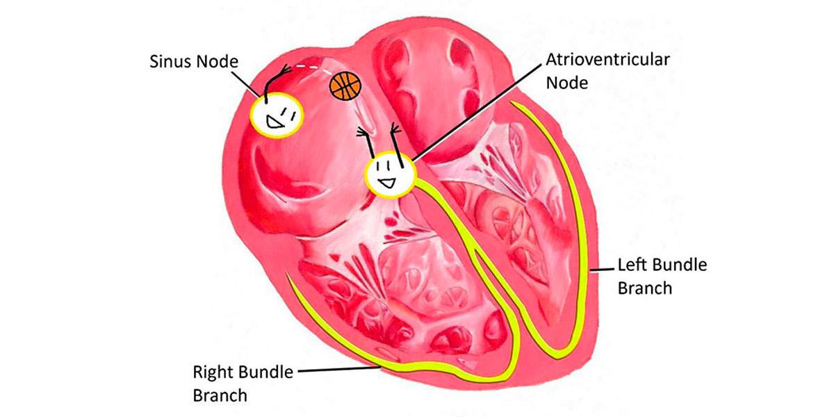 Hearthbeats