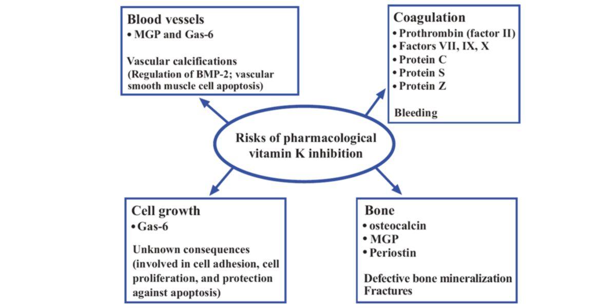 Inhibition vitamin k
