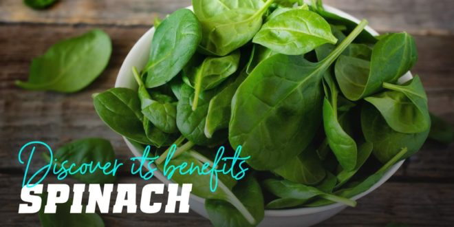 Spinach: Discover all of its Benefits