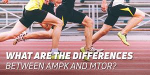 AMPK and mTOR