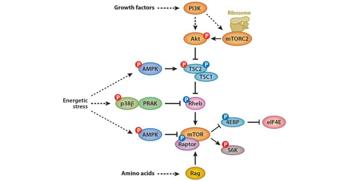 Biomolecular relationship