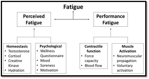 Fatigue perception basketball