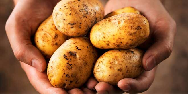Resistant Starch: What it is, Benefits, Does it help to lose weight? What foods have it