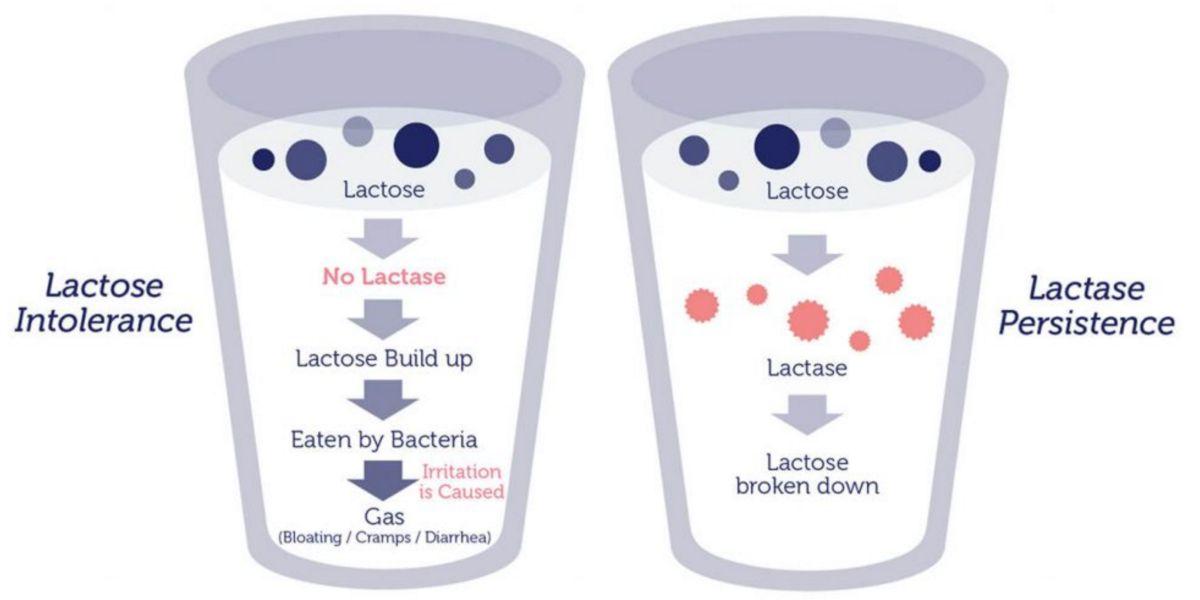 Lactase for symptom relief