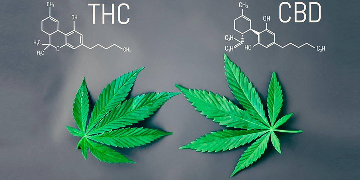 THC CBC