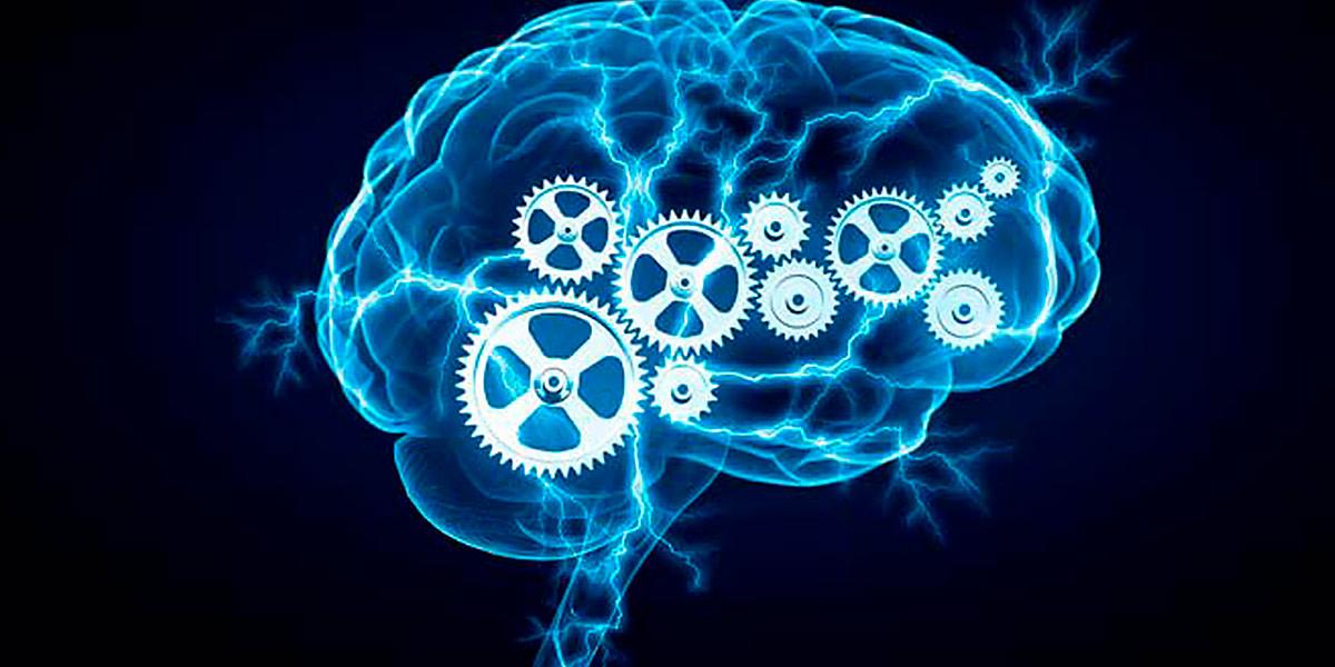 Tyrosine brain health