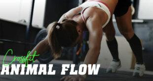 Animal flow crossfit