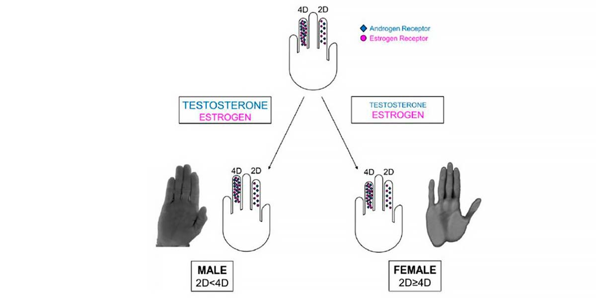 Hormone predominance