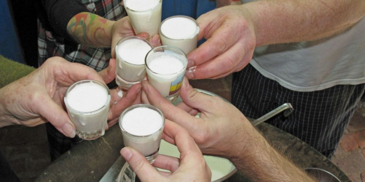 Toasts with Eggnog