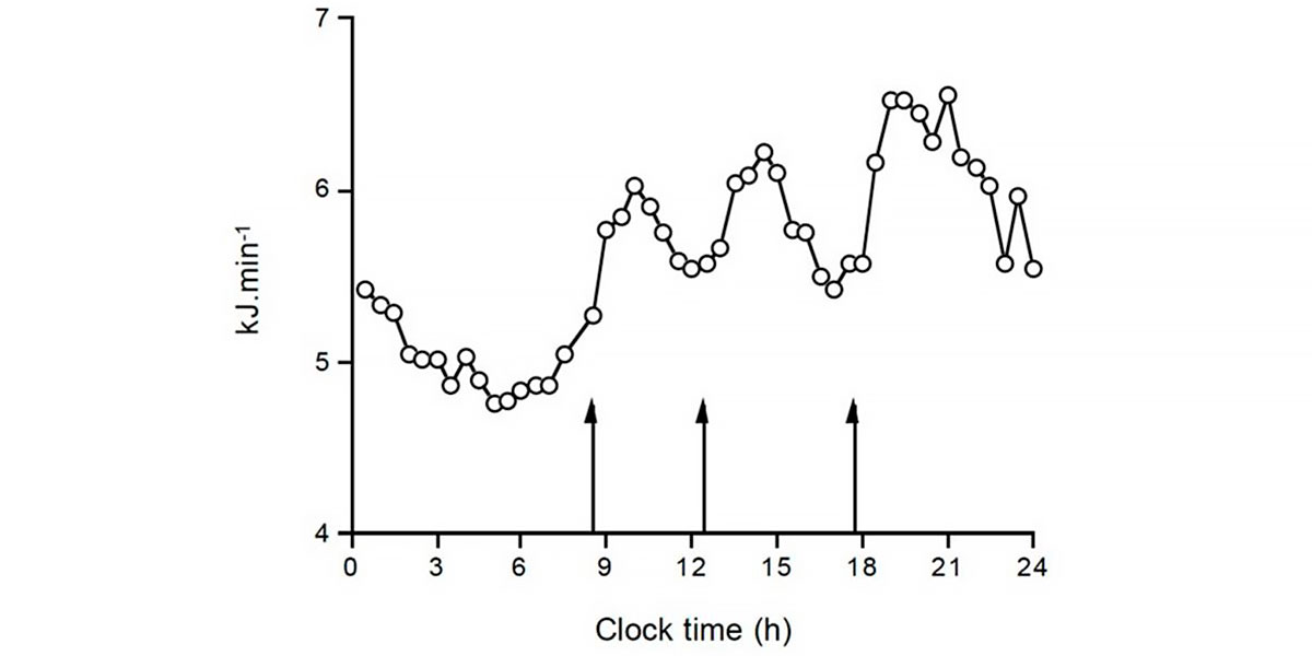 Fluctuation of energy expenditure