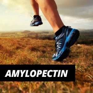 Amylopectin - Benefits and Properties