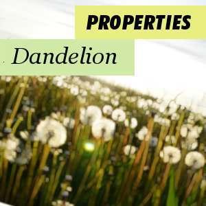 Properties of Dandelion